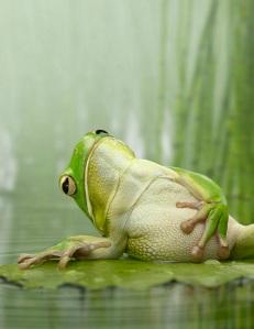 """""""Blue Frog"""""""