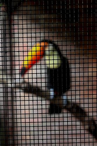 Janak Samtani - Life Imprisonment
