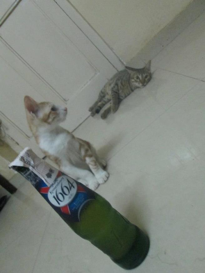 billoo and kittu and beer